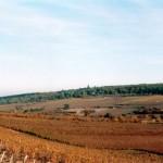 Une partie des vignes du Domaine, côté Sud-Est